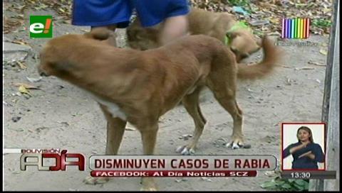 Se registra un descenso en los casos de rabia canina
