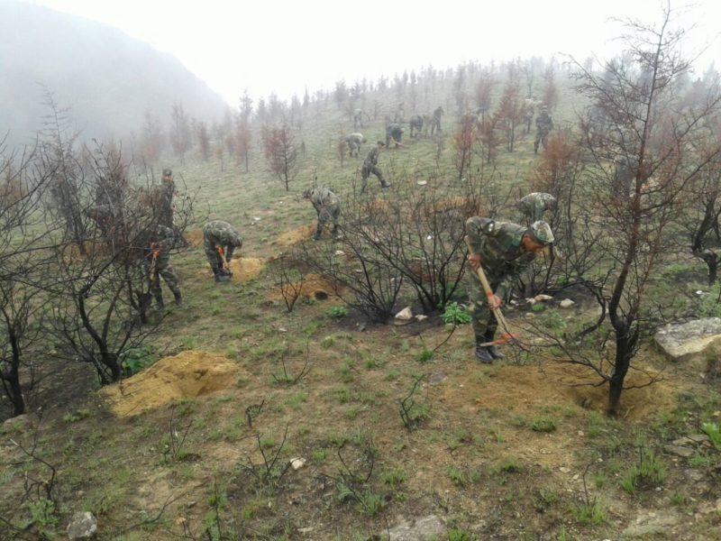 Avanzaron en un 2% la reforestación de la cordillera de Sama tras el incendio en Tarija