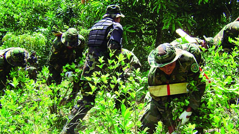 Por segundo año consecutivo se incrementan los cultivos de coca en Bolivia