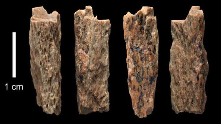 Gracias a un hueso de apenas 1,5 cm se descubrió esta extraña cruza entre dos especies distintas
