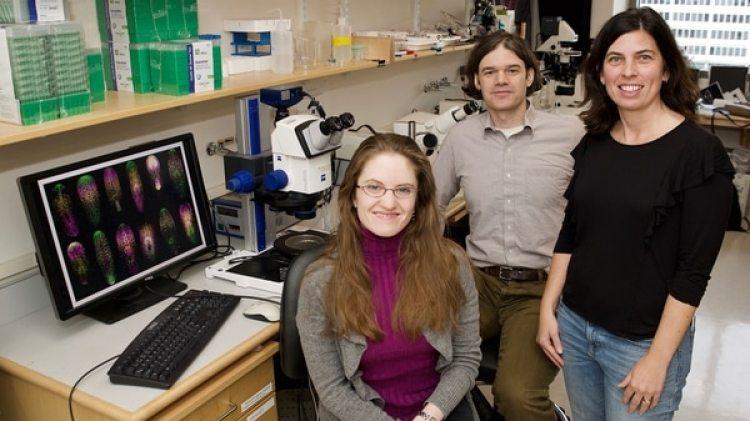 Trabajo en equipo: el hallazgo sobre los gusanos planarias fue realizada por la científica argentina Lucila Scimone (a la derecha), junto con Peter Reddien y una estudiante de doctorado, Lauren Cote (sentada). (Instituto Whitehead para Investigación Biomédica)