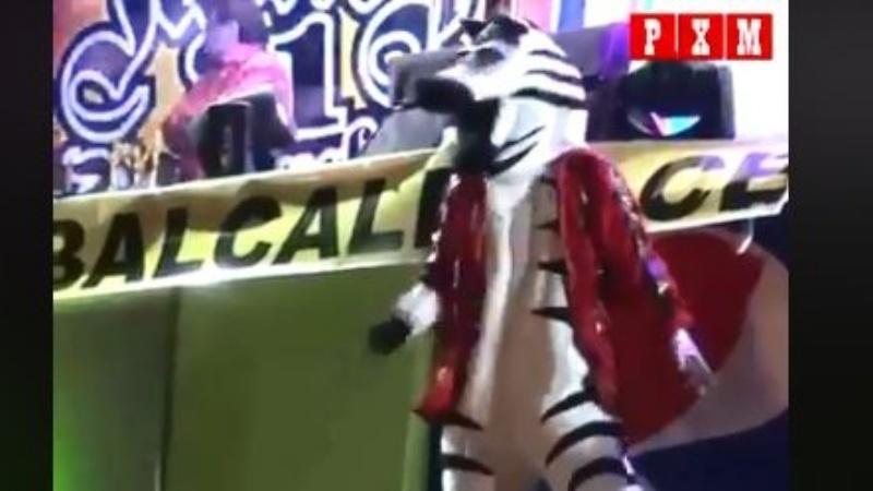 La cebra que baila como Michael Jackson se hace viral