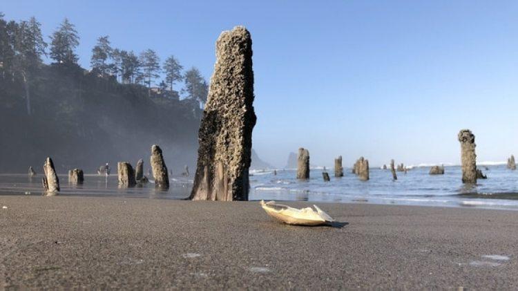 """El """"bosque fantasma"""" que fue sacudido y enterrado en el océano como resultado del terremoto de Cascadia (EFE/Tania Cidoncha)"""