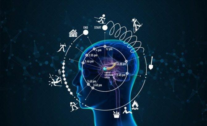 """Descubren el """"reloj cerebral"""" que determina cómo percibimos el tiempo"""