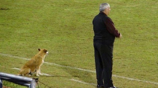 """¡Insólito! Una perra es """"asistente"""" en un club paraguayo"""
