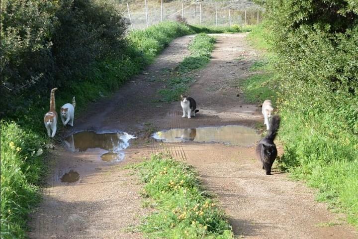 Los gatos caminando en el santuario. Son una institución y hay que tratarlos con mucho cariño (Facebook).