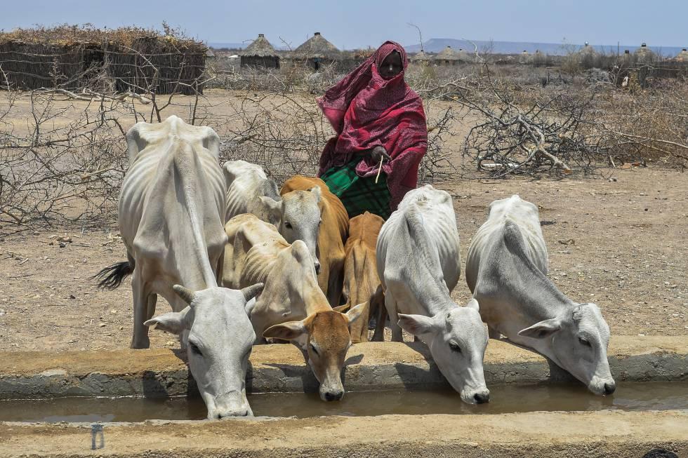 En el último trimestre de 2017, la situación alimentaria era crítica en Etiopía. La mayor cantidad e intensidad de eventos climáticos adversos está detrás del aumento de hambrientos en el mundo.