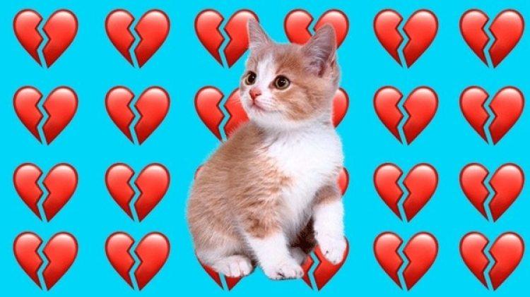Foto de un gatito via Kisspng