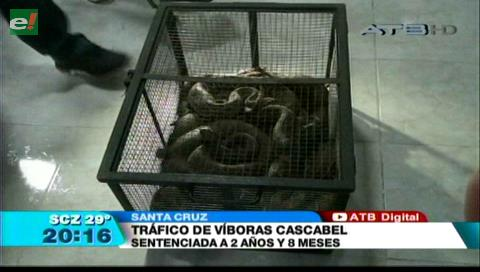 Condenan a la mujer que traficaba 20 serpientes