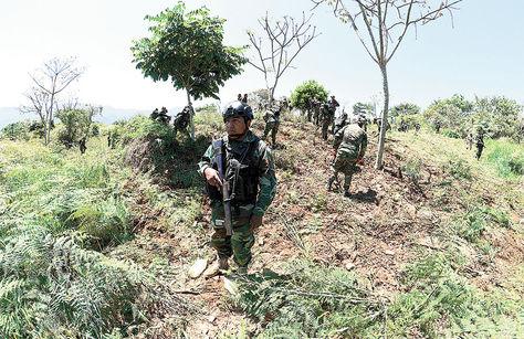 Operativo. Efectivos de la Fuerza de Tarea Conjunta (FTC) realizan la erradicación de coca excedentaria en el municipio de La Asunta.