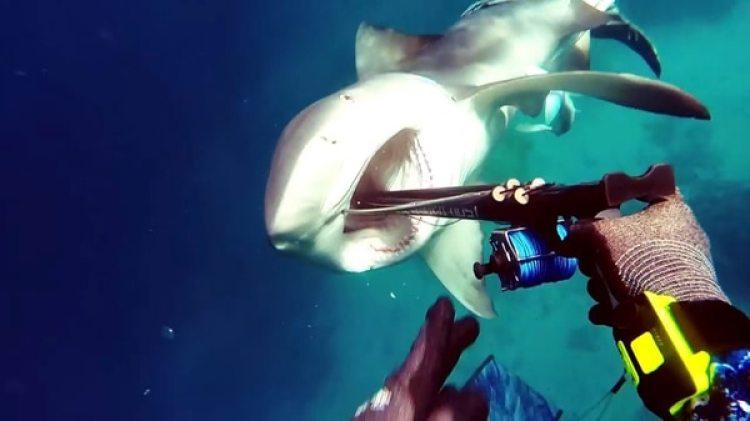 Los ataques más frecuentes son de tiburones blancos