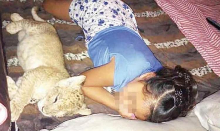 En medio del drama Simba tuvo que ser asegurado por autoridades de la Profepa (Foto: Twitter)