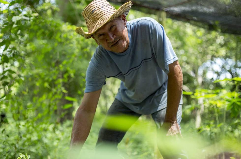Un agricultor trabaja el campo en Montes de María (Colombia).