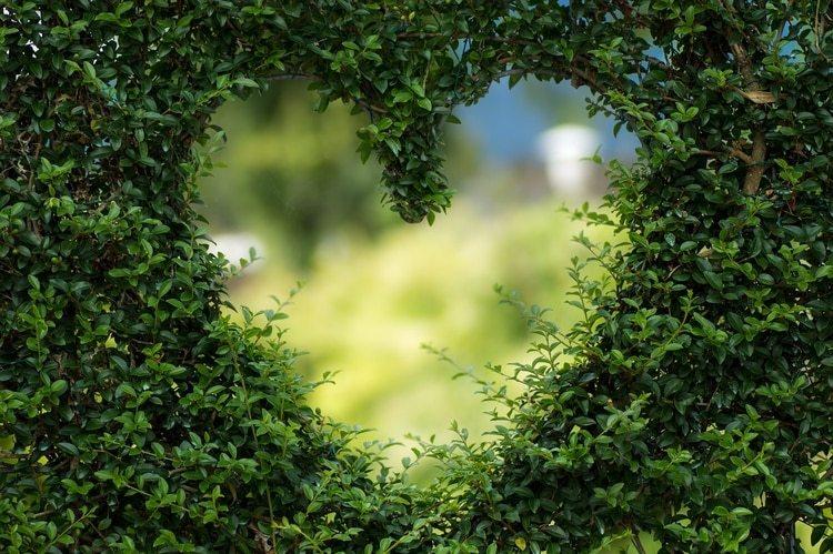 Según la investigadora de la UNAM, el enamoramiento y la sensación duran seis meses (Foto: Pixabay)