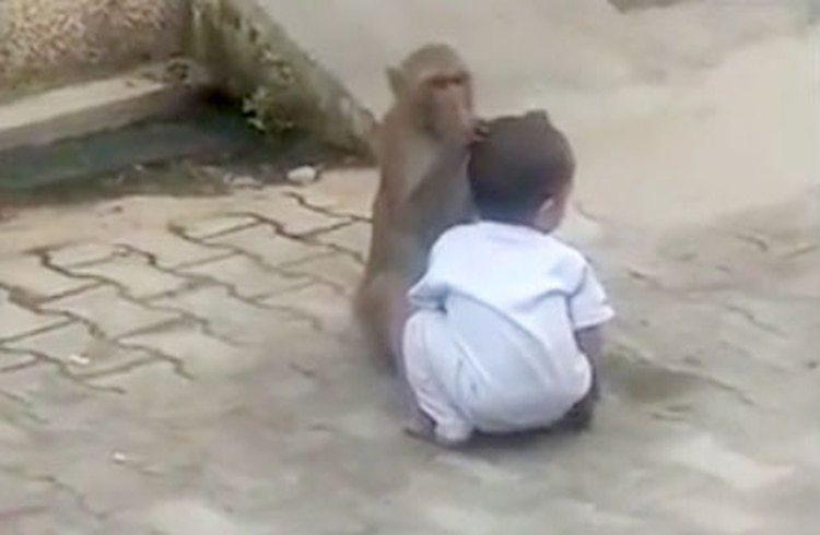 Inspeccionó su cabeza en medio de la calle. El niño de dos años no entendía lo que pasaba (Foto: NewsLionsMedia)