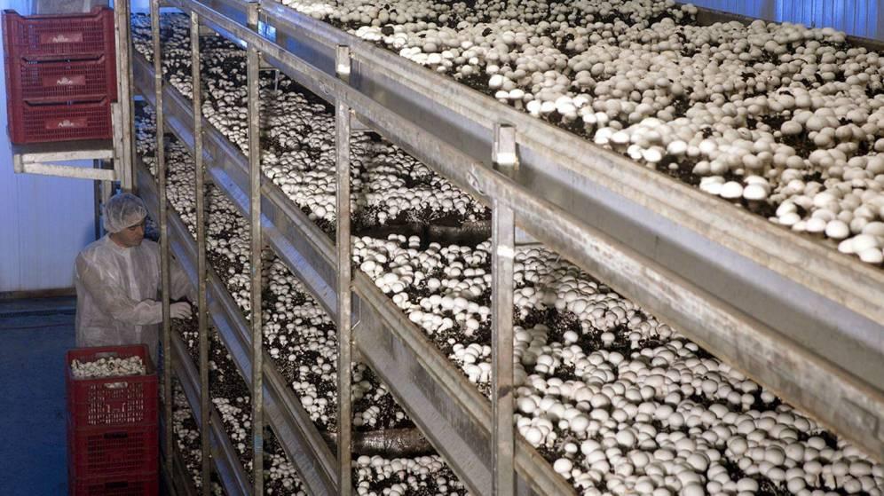 Foto: Los champiñones, un superalimento que debemos incorporar a nuestra dieta