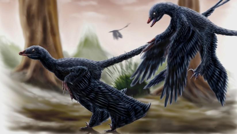 Hallan una nueva especie de lagarto extinto en el estómago de un dinosaurio fosilizado