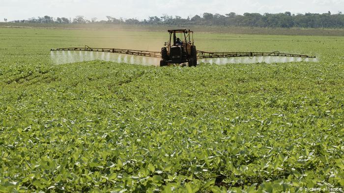 Cultivo industrial de soja en Paraguay para la exportación.