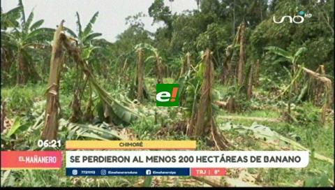 Por vientos, los bananeros pierden $us 300 mil y prevén recuperarse en seis meses