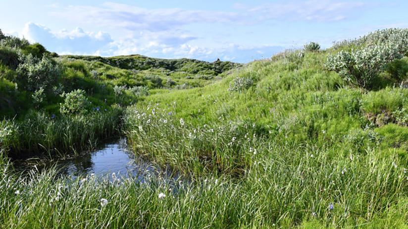 Deshielo del Ártico deja al descubierto varios oasis con amapolas y manzanillas en medio del permafrost