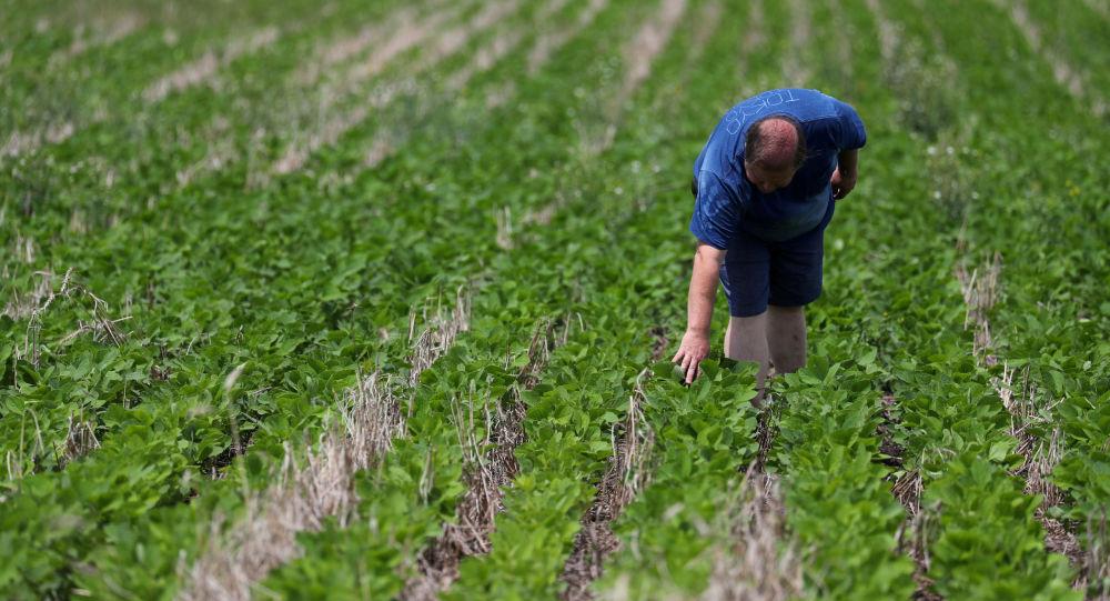 China comprará harina de soja a la Argentina — Histórico