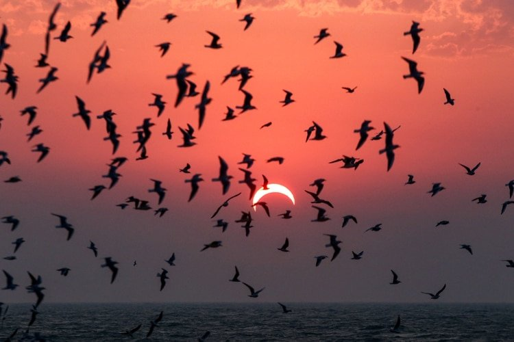This picture taken early on December 26, 2019 shows seagulls flying above a beach in Kuwait City during the partial solar eclipse event. (Photo by YASSER AL-ZAYYAT / AFP)