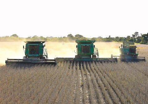 Exportación. Producción de soya en Santa Cruz que tiene como destino los mercados externos.