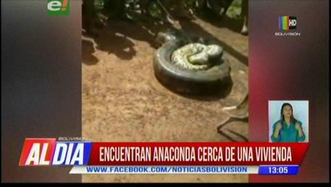 Vecinos matan a una anaconda de ocho metros en Riberalta