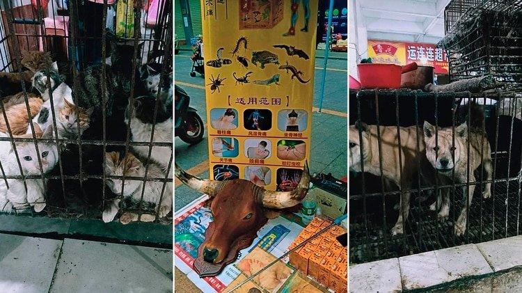 Los mercados chinos siguen vendiendo murciélagos y sacrificando animales exóticos (Gentileza The Daily Mail)