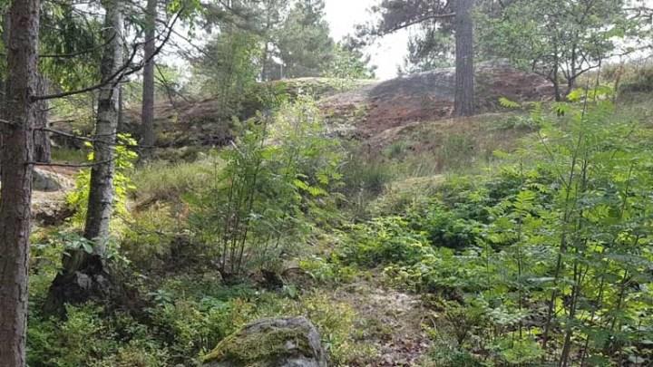 Kalliota ja puita
