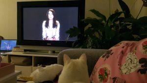 Tinkie tv kijken