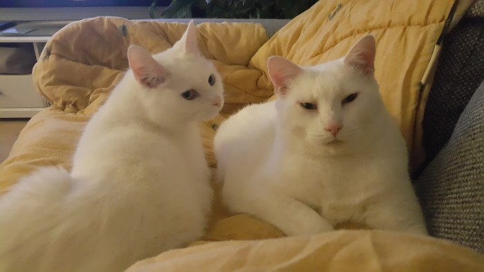 Bella en Tinkie