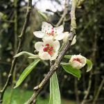 St. Anne's Park Spring Blossoms