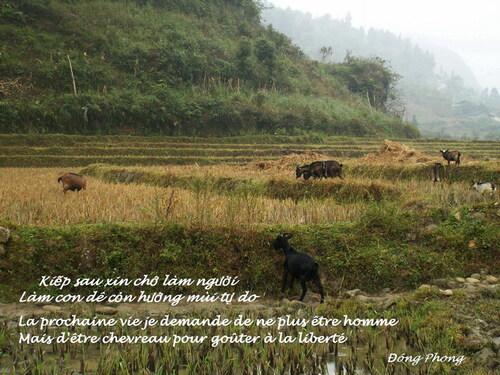 Ouverture de la Chèvre