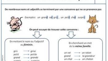 Exercices Les Determinants Loustics