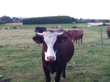 Notre nuit dans la Vache Ecolodge à Diverti'Parc