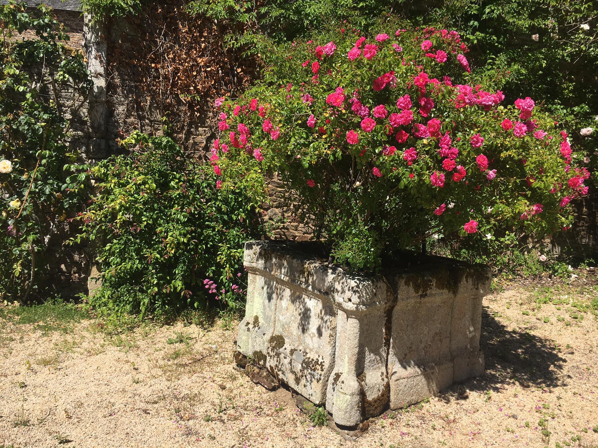 Peut être une image de fleur, nature et arbre