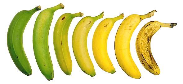La banane, le tonus .. - Fleur de Rocaille