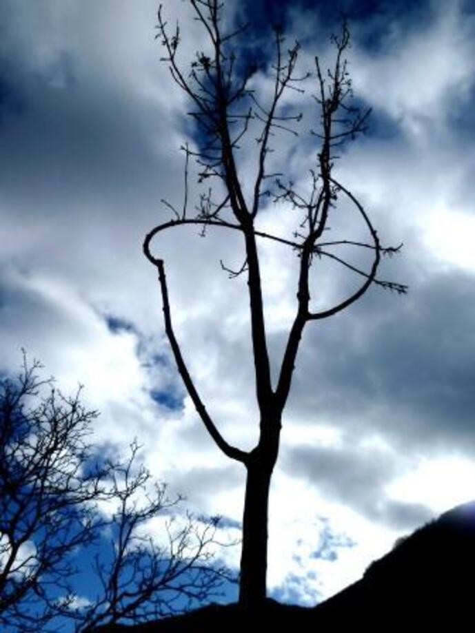 Chantier D'ART /  Chantier d'arbre à la CLEM