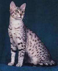 Le Chat - La Légende