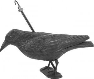 Kruk Odstraszacz Ptak