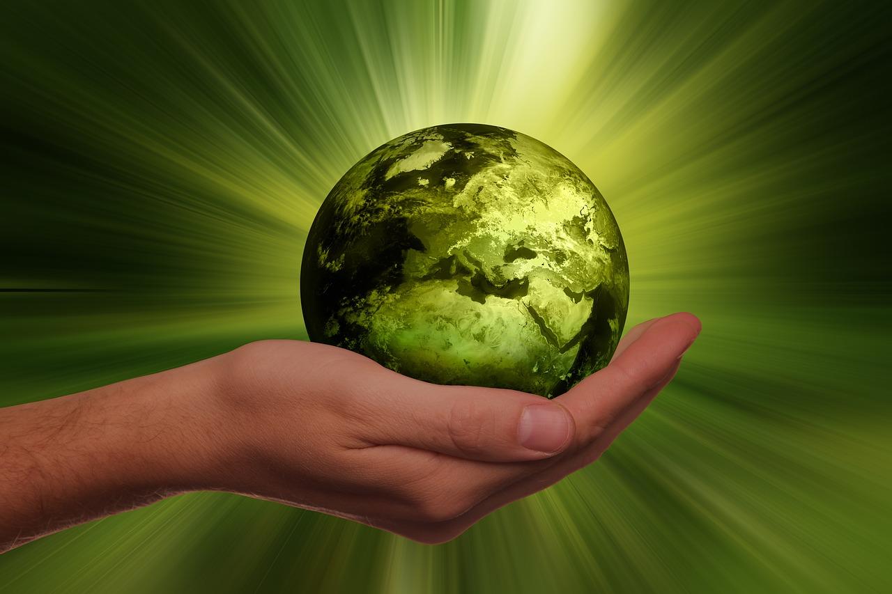 Co to jest ekologia? Jak wytłumaczyć? Definicja dla dzieci - EKO misz-masz