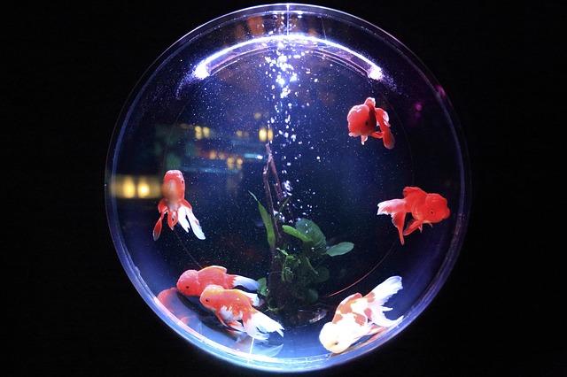 Grzałka do akwarium w kształcie kuli