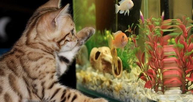Czy filtry do akwarium mają wpływ na rośliny akwariowe