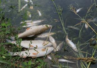 помор риба, преузето са ribolov.co.rs
