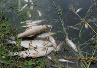 pomor riba, preuzeto sa ribolov.co.rs