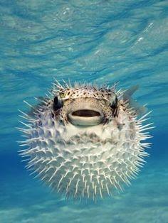 Les 500+ meilleures images de univers marin   animaux marins, animaux  aquatiques, la vie aquatique
