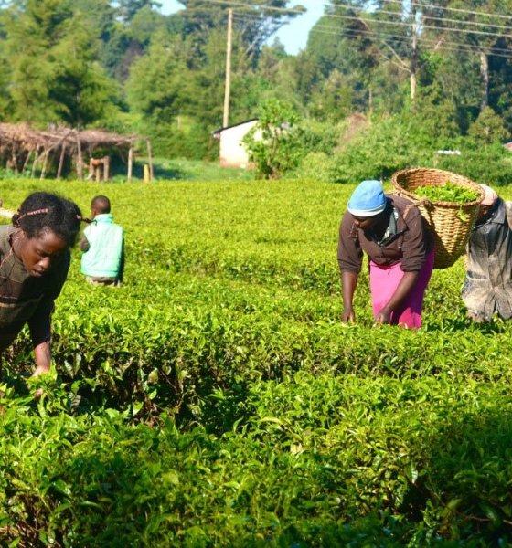 FG Embark On N600bn Agriculture Financing Scheme