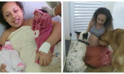 Jealous Dog Kills Twin Babies After Mother Briefly