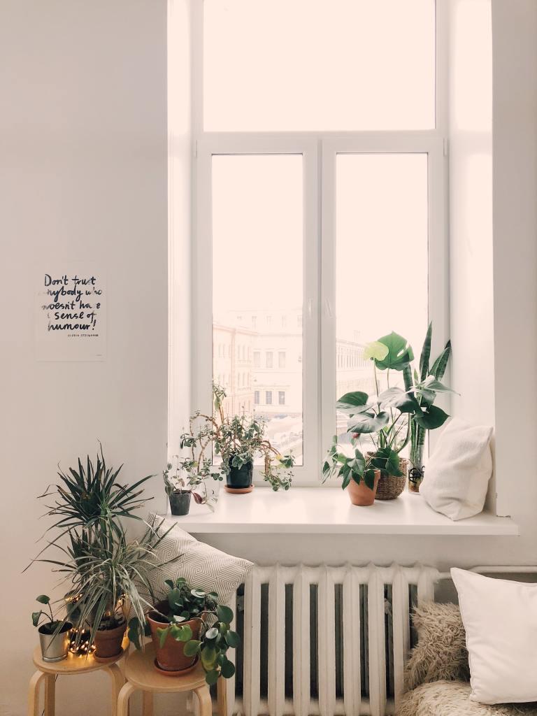 Zierpflanze
